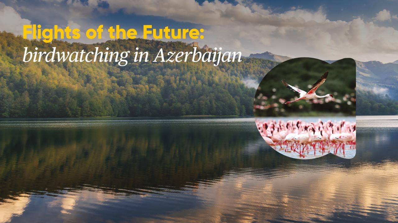 Azərbaycanın ornitoloji turizm potensialına həsr olunmuş vebinar keçirilib